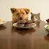 Enterate De Los Alimentos Prohibidos Para Perros Aqui