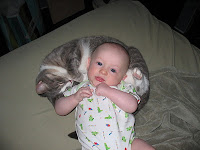 A baby lying on a young cat  | Exclusively Cats Veterinary Hospital, Waterford, MI