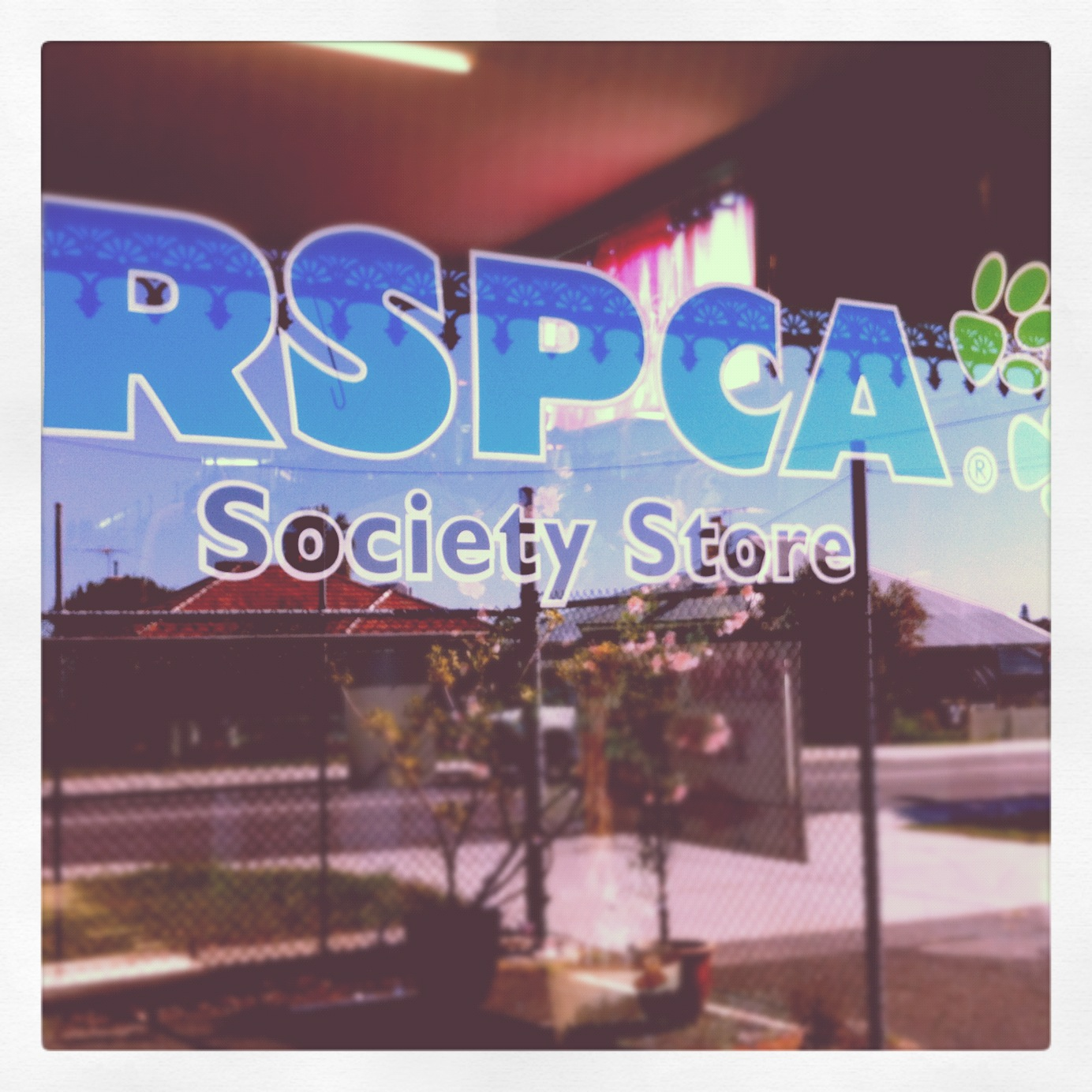 Hungry Like The Wolf - RSPCA Palmyra Op Shop Review