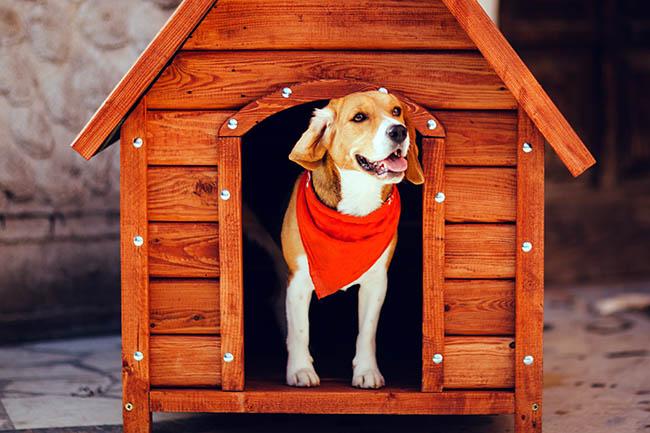 Czy pies może mieszkać w budzie?