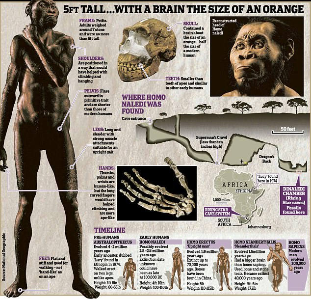 Hasta ahora los científicos pensaban que los restos de «Homo naledi» encontrados se remontaban a unos 2 millones de años atrás. Sin embargo, los nuevos estudios han demostrado que se trata de fósiles mucho más recientes, que ubican a la especie recientemente descubierta en una convivencia con el «Homo sapiens», posible responsable de su extinción.