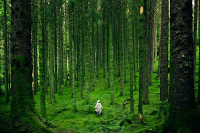 person-walking-between-green-forest