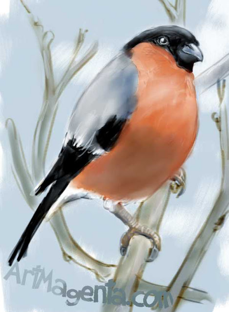Bullfinch by ArtMagenta.com