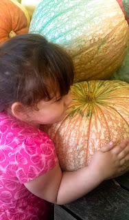 picking our carving pumpkins, future jack-o-lanterns, jackolaterns