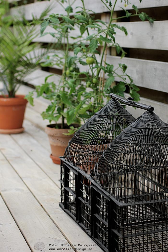 altan, trädäck, trädäcket, uteplats, uteplatser, patio, tomat, tomater, tomatplantor, tomatplanta, bambu, bambuträd, fågelbur, exterior, outdoors,
