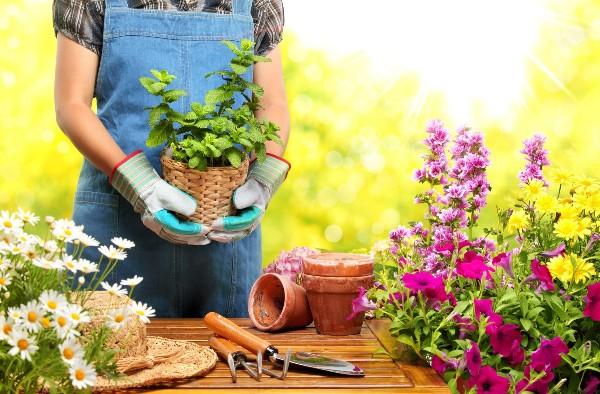 5 Idées de jardinage pendant le confinement