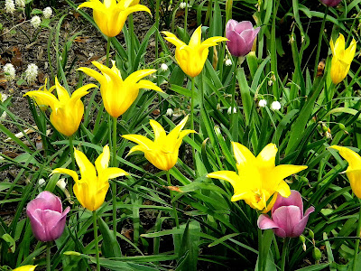 Spring Flowers Central Park Clip Art