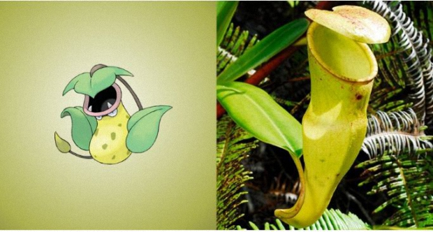 Victreebel is a pitcher plant