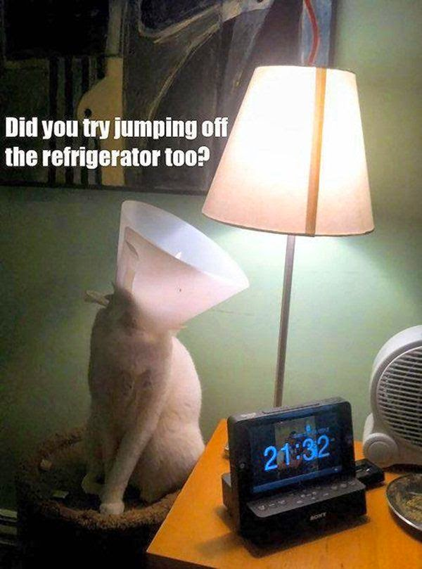 Funny Cat Lamp Did you try to jump off the refrigerator too Joke Picture