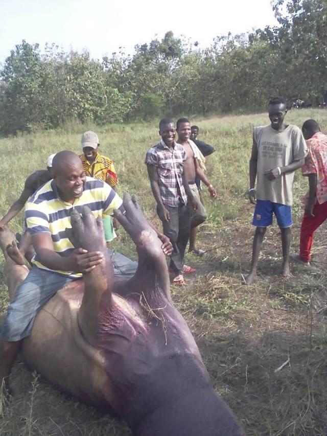 Environnement: Un jeune hippopotame tué dans la mare d'Afito