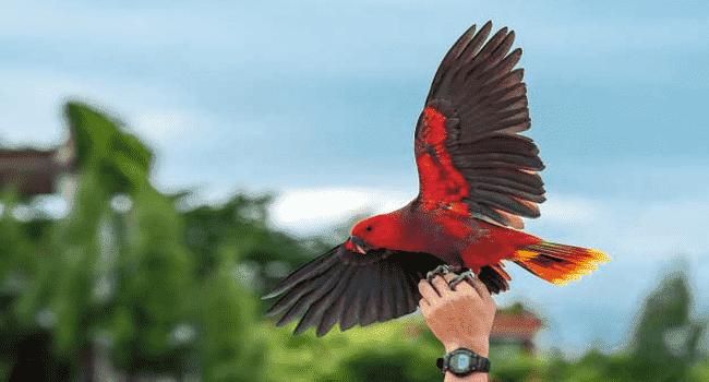 Kenali 16 Ciri Dan Jenis Burung Nuri Yang Mudah Di Kenali Dan Bisa Berbicara