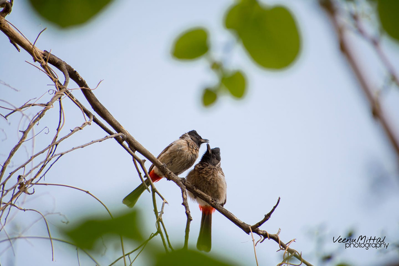 """""""Bird or Birds"""" - Photography Contest Entry by Veenu Mittal"""