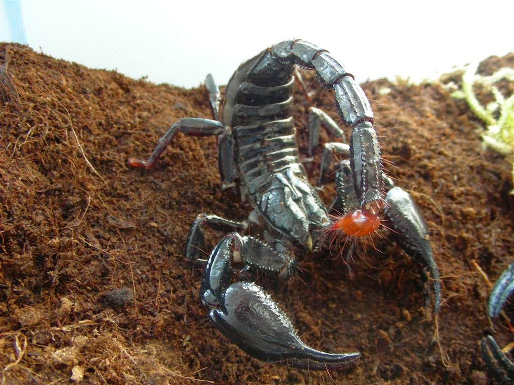 Nature Hd Wallpapers 1080p 3d Black Scorpion Hd Wallpapers Hd Wallpapers Blog