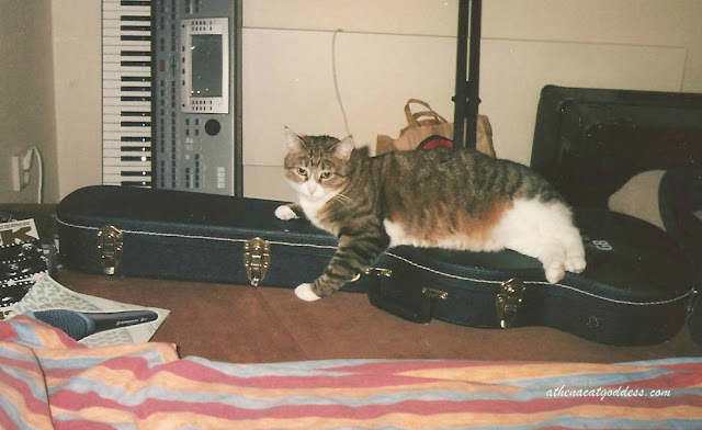 Molly on guitar case