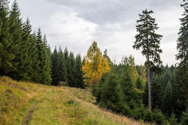 Drei-Täler-Tour  Themenwanderweg Bad Harzburg  Wandern im Harz  Baumwipfelpfad - Radauwasserfall - Eckertalsperre 09
