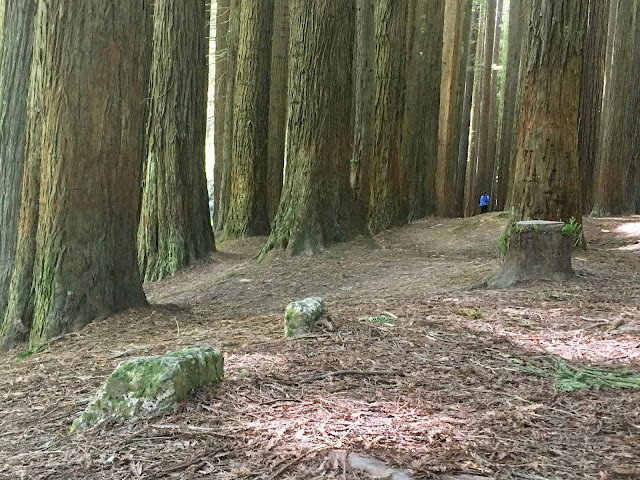 small person in giant forest