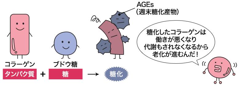 老化とコラーゲンの「糖化」