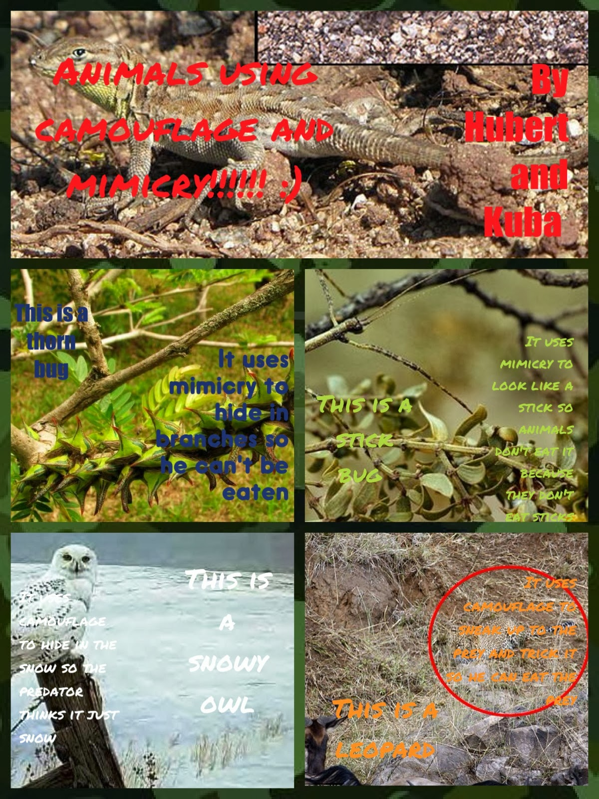 P6 At Stancis Camouflage And Mimicry
