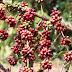 Emater orienta produtores de café do Cone Sul sobre técnica de fermentação de grãos para obter produtos de alta qualidade