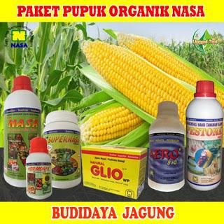 pupuk organik nasa untuk padi pare