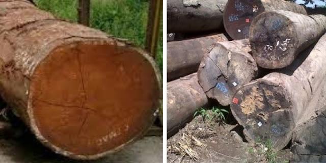kayu merbau vs ulin