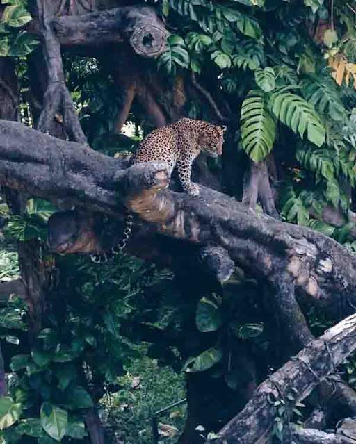Wisata Bali Safari
