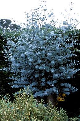 Mon arbre le de vivre le douaire tout savoir sur l for Arbre qui pousse tres vite