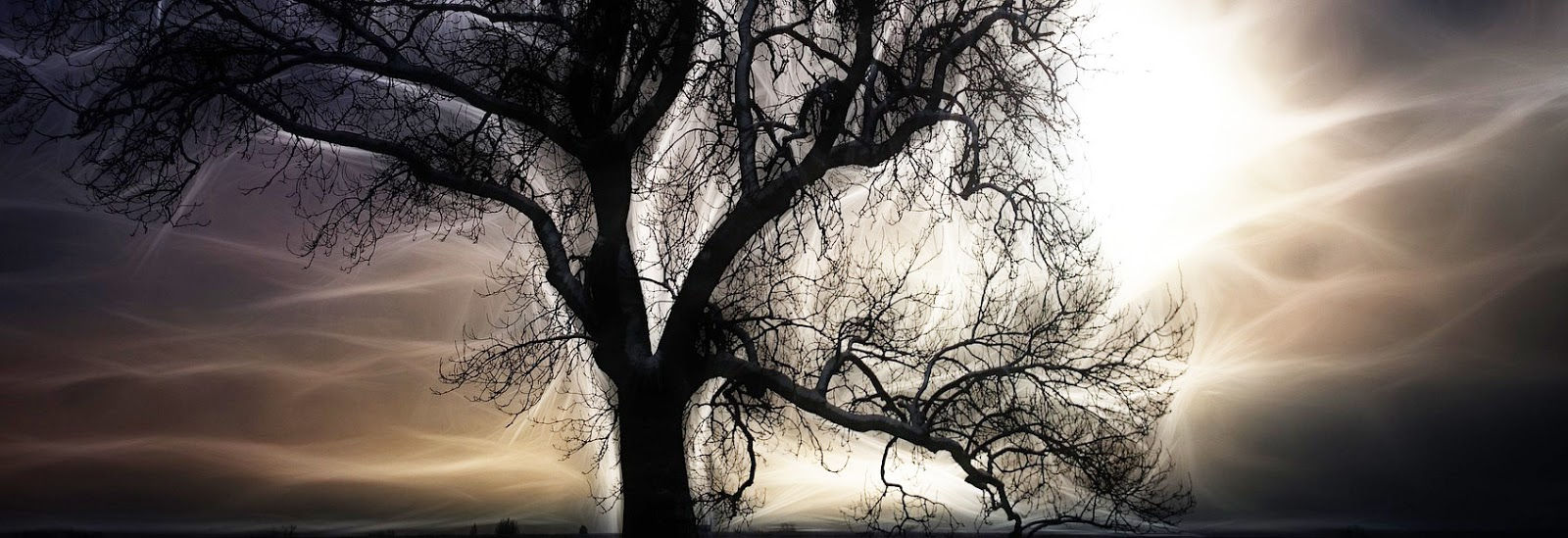 Magical Agust Night Under Giant Oak >> Sofia Karin Axelsson