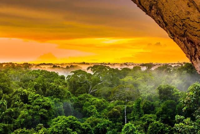 Amazon là nơi sinh sống của khoảng 160.000 loài cây. Khí hậu nóng, ẩm trong rừng khiến cây cối phát triển kỳ lạ. Du khách đến đây có thể gặp những cây cao tới 40 m, điều này giúp hấp thụ tối đa ánh nắng mặt trời. Nhiều nghiên cứu đã chỉ ra cây cối trong rừng Amazon còn có khả năng tự tạo mưa cho mình trước khi mùa mưa đến.