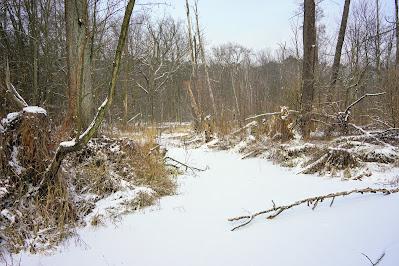 Zaborów Leśny