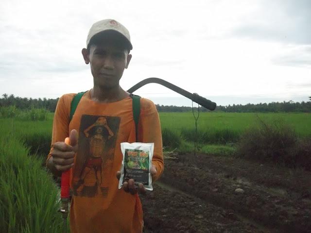 Mosa Top BN Pestisida Organik Pertanian Untuk Tanaman Padi