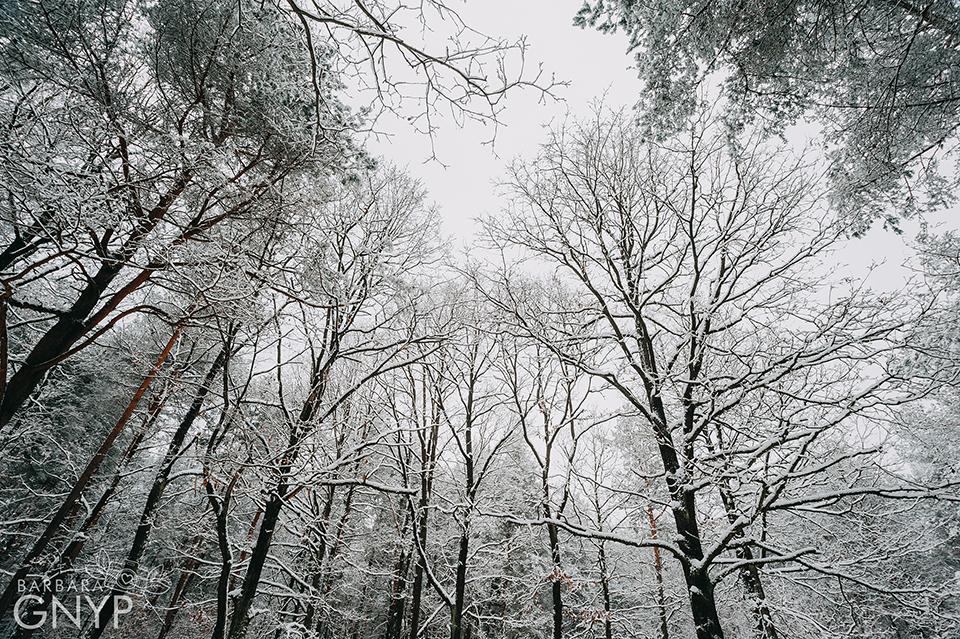 Zimowa sesja plenerowa, Fotograf Niemce, fotograf Lublin, fotograf Lubartów, sesja w lesie, sigma 17-35