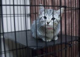 Desinfektan Kandang Kucing Yang Direkomendasikan Dan Aman Digunakan