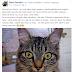 Em Cajazeiras animais desaparecem e proprietários fazem apelos usando as redes sociais para encontrá-los