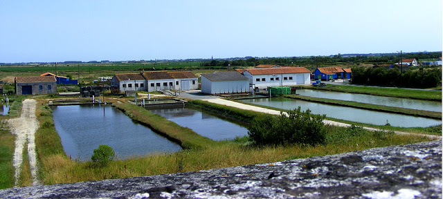 Oyster maturing pools (claires), Brouage, Charente-Maritime, France. Photo by Loire Valley Time Travel.