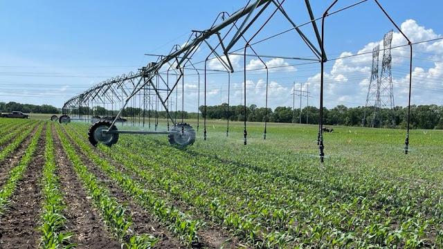 sand plain research farm minnesota irrigation