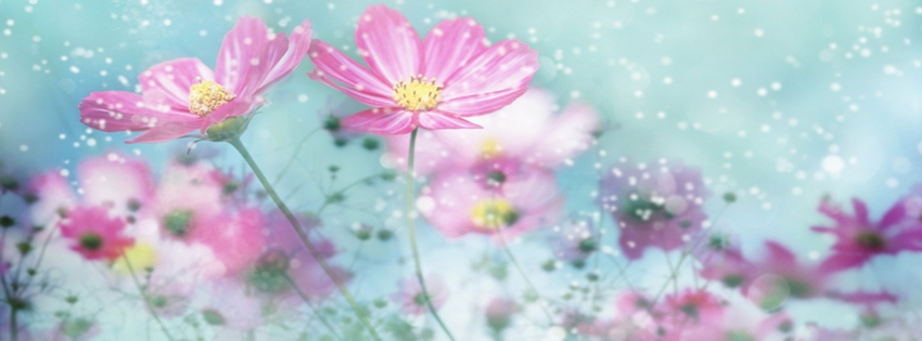 Flores Hermosas Para Portada