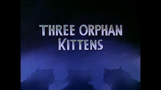 three orphan kittens