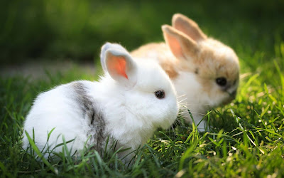 beautiful-rabbits-wallpapers-imgs-walls