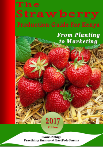 strawberry farming guide kenya
