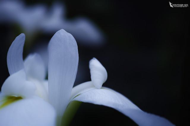 gardenia dp3Quattro