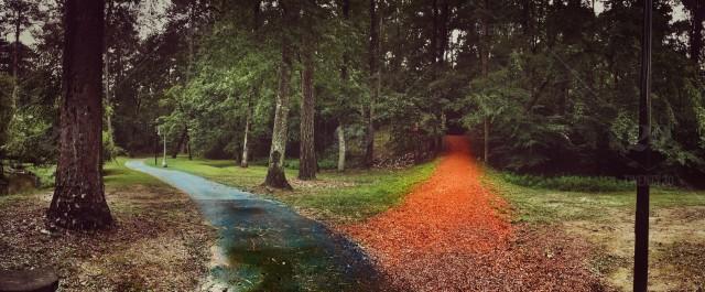 Disyuntiva: dos caminos en medio de un bosque