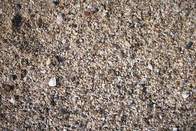 shell beach manori