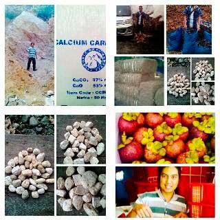 Buah Manggis kwalitas export Sumatera Barat, CV Prima jaya niaga