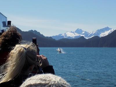 Humpback Whale – The Breach