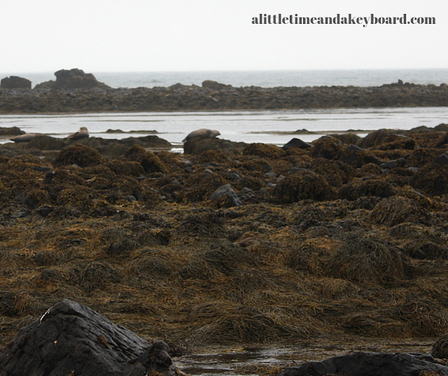 Seals resting at Ytri Tunga Beach on the Snaefellsnes Peninsula of Iceland
