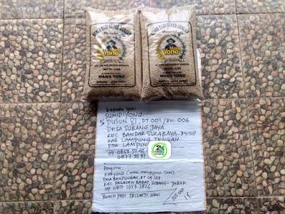 Benih padi yang dibeli SUMIDIYONO Lamteng, Lampung. (Sebelum packing karung ).