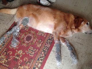 tratamento artrite em cães
