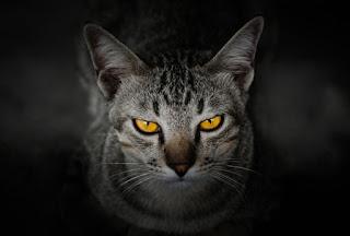 kucing  siap menyerang lawan attack mode kucing