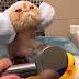 Este gato tomando banho é um alívio para os seus nervos